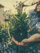 Gardening: get your garden ready for Autumn