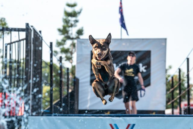 Win 1 of 5 double passes to the Sydney Dog Lovers Show